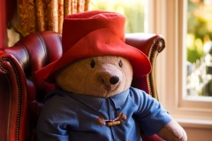 Roseleigh-Paddington-Bear
